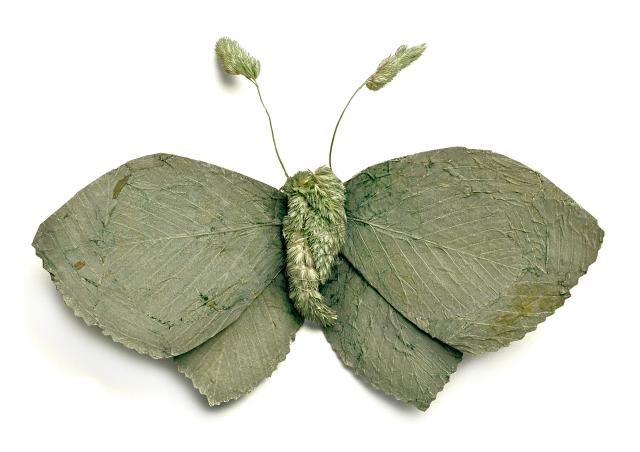 Large Emerald (Geometra Papilionaria)