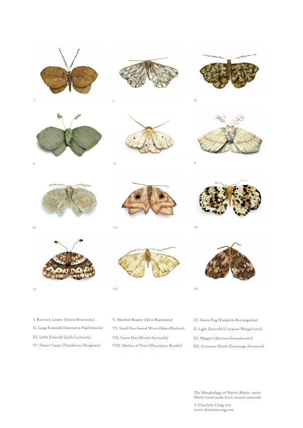 Moth Catalogue Poster A3